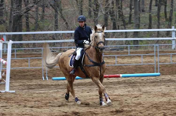Во Владивостоке пройдет первенство города по конному спорту