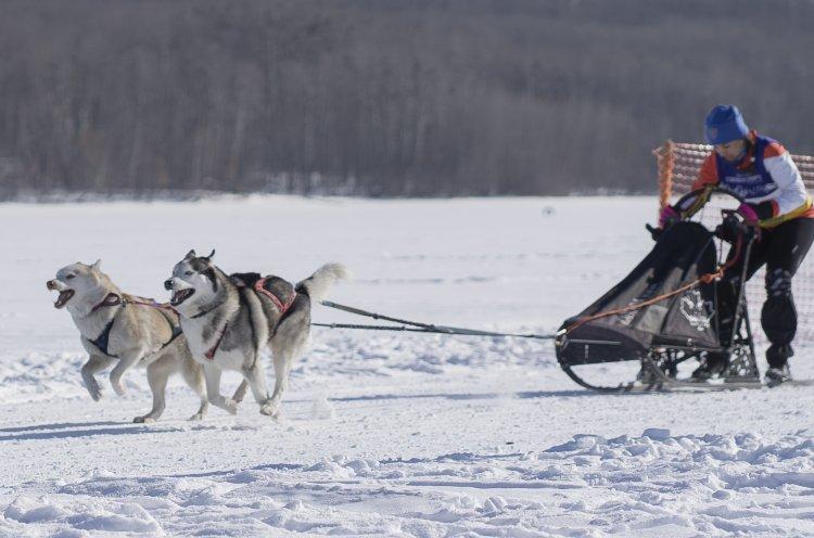 Чемпионат и первенство Приморского края по ездовому спорту прошли в Спасском районе