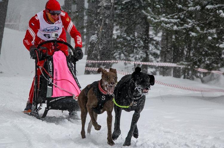 Приморский спортсмен стал вторым на чемпионате России по ездовому спорту